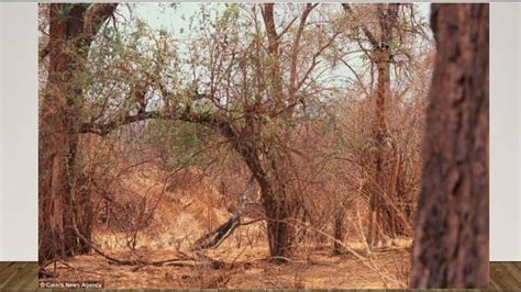 Find In Can You Find The Giraffe In 30 Seconds