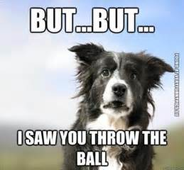 Confused Dog Meme - a very confused dog very funny pics