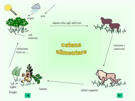 cos 232 un ecosistema l ecosistema 232 un ambiente dove