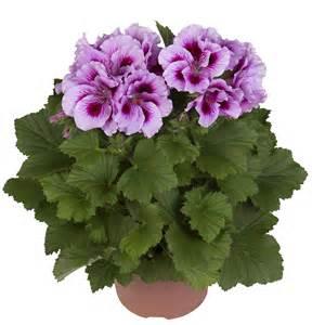 cynthia hendriks plants