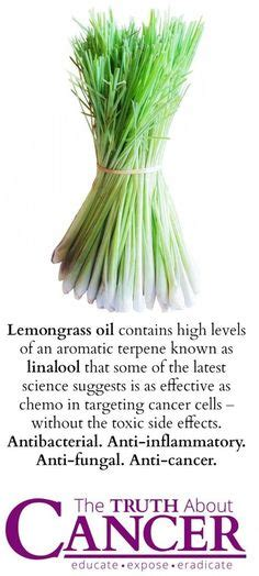 1000+ images about MAGICAL HERBS and EDIBLE WEEDS on ... Lemongrass Benefits Cancer