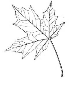 maple leaf coloring page maple leaf coloring page coloring home