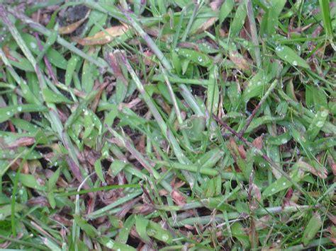 Pilze Im Garten Bekämpfen die besten 25 giersch bek 228 mpfen ideen auf