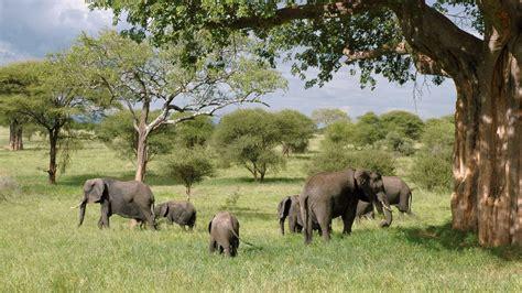 theme park meaning in urdu uganda safaris gorilla safaris in uganda marlene