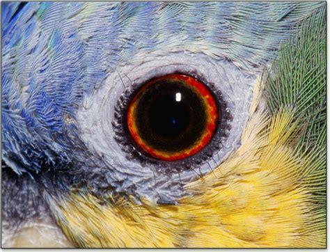 retina gives birds superior vision