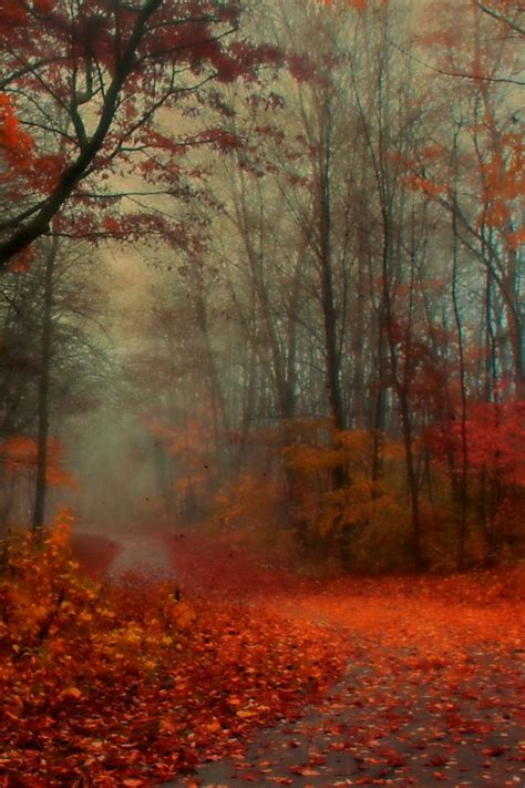 romantic autumn iphone  wallpaper  iphone