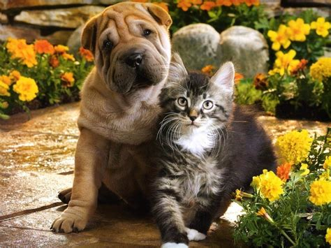 images of puppies and kittens omg these pictures of puppies and kittens are soooooooo adorable aren t i right
