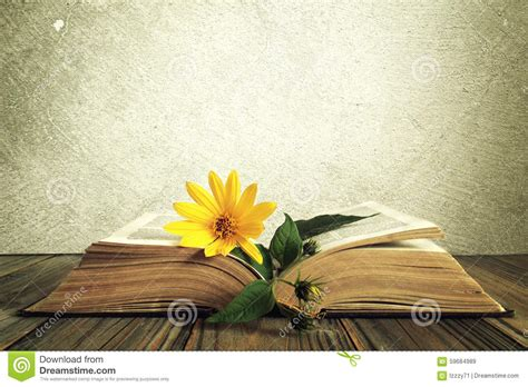 libro footpath flowers yellow flower on the opened old book stock image image 59684989