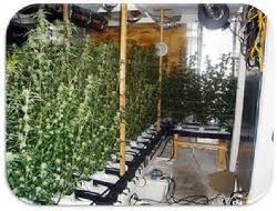 buying a grow op house florida marijuana grow house inspections
