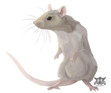 new year rat and monkey rat zodiac 2015 autos post