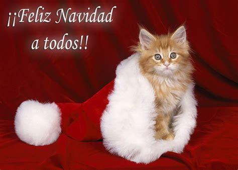 imagenes de feliz navidad con gatitos feliz navidad a to2 im 225 genes navide 241 as sidie mi web