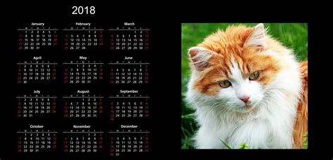 cat gallery calendar 2018 2018 cat calendar free stock photo public domain pictures
