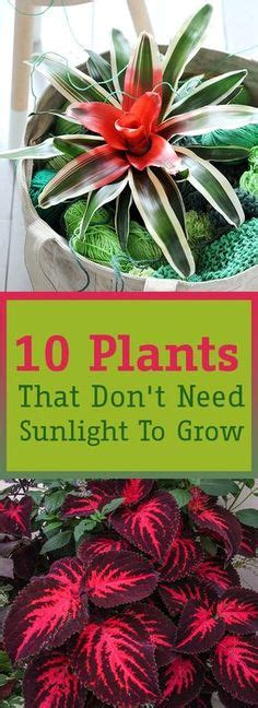 10 houseplants that don t need sunlight sansevieria trifasciata how to care for a snake plant helpful tips pinterest