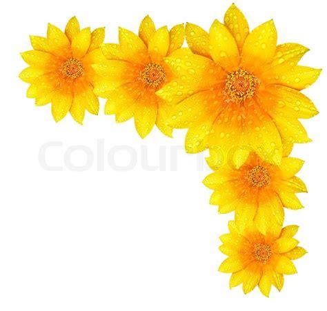 border design flower yellow yellow flower border stock photo colourbox