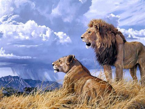 pride art lion animals ultra  hd wallpaper wallpaperscom
