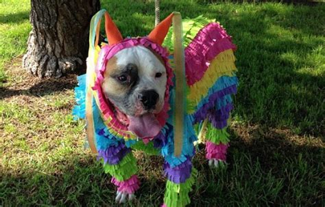 pug pinata survey virginia ranks in country for including dogs in activities