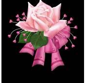 Rosas Con Movimiento Flores Animadas En Fotos De Car