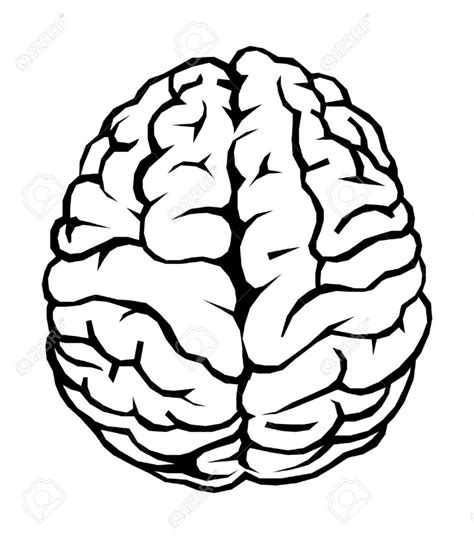 brain clipart best brain clipart black and white 28898 clipartion