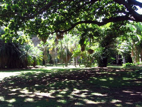 Foster Botanical Garden Honolulu Foster Botanical Garden