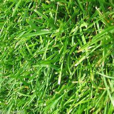 just planted yukon bermuda seed aroundtheyard com forums