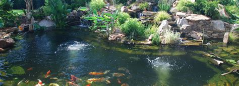 Koi Pond In Backyard Complete Ponds Complete Ponds
