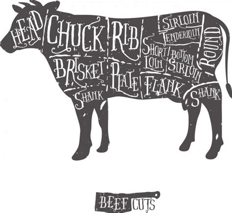 beef sections cuts of meat national beef association