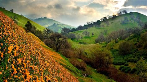 flower valley 1280 800 wallpaper beautiful valley of flowers nature photography 1787