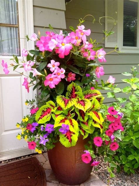 25 best ideas about petunias on pinterest insect repellent plants companion planting and