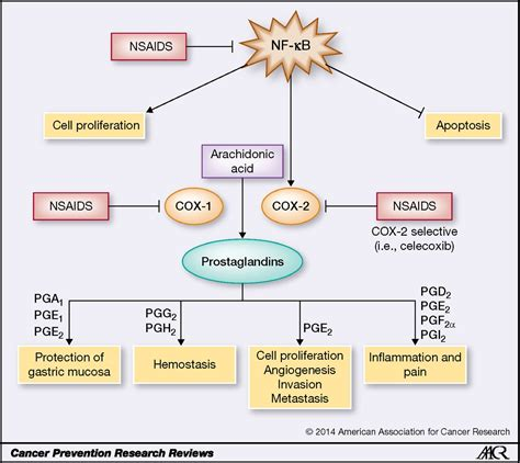 Nsaids Also Search For Aspirin And Other Nsaids As Chemoprevention Agents In Melanoma Cancer Prevention