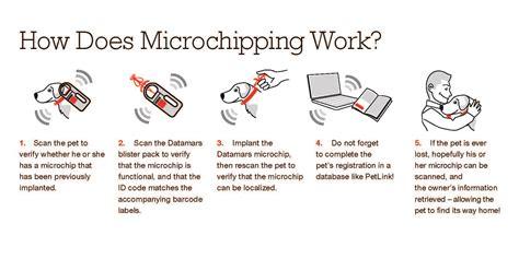 microchip clinic pet extravaganza carrollton great