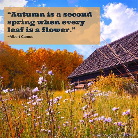 quotes about fall colors quotesgram quotes about fall leaves quotesgram