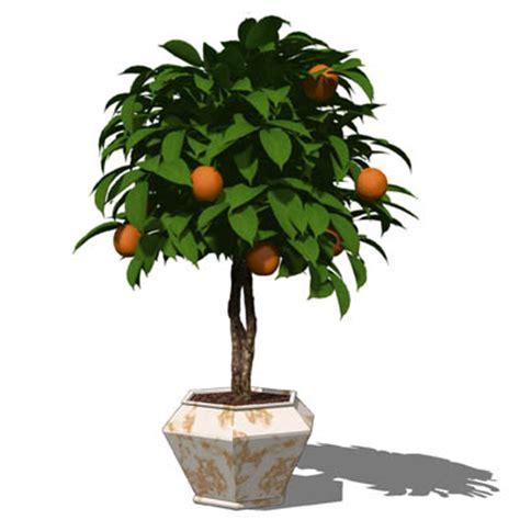 small orange tree potted plant 02 3d model formfonts 3d models textures