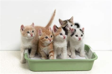 clean  litter box  conscious cat