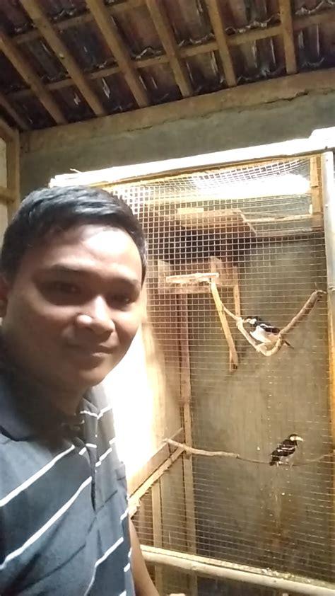 Harga Pakan Burung Jalak Suren penghoby mancing dari konoha semarang ternak burung