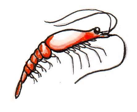 Free Pictures Of Krill