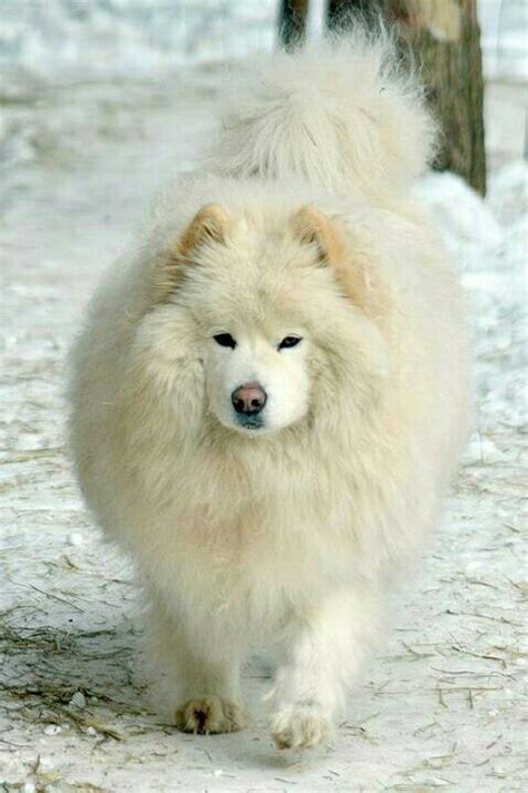 are dogs and bears related polar dogs