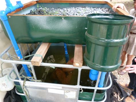 Aquaponic Starter Kit Malaysia aquaponics grow bed philippines info plans diy