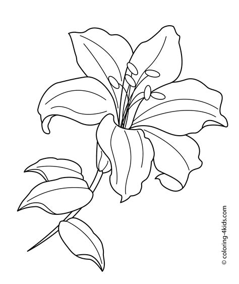 coloring pictures of lily flowers lilium flower coloring pages for kids printable free