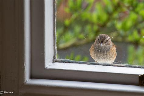 dunnock i need a bird whisperer lol all creatures