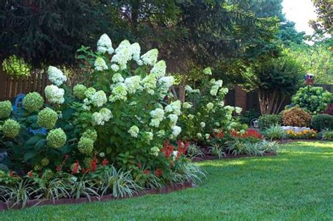 home landscaping with hydrangeas and brick border home