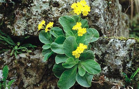 cave plants flora und fauna park 紂kocjanske jame
