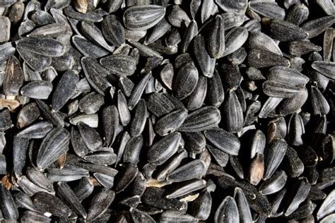 is black sunflower seeds for birds black sunflower seeds up picture free photograph