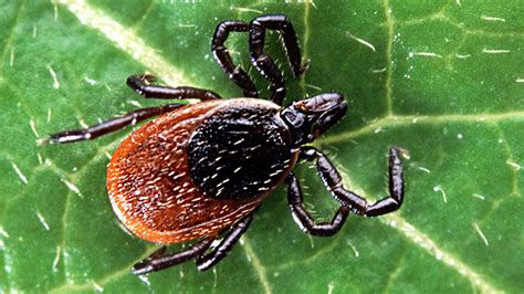 how can a live with lyme disease could you lyme disease dr sanjay gupta everyday health