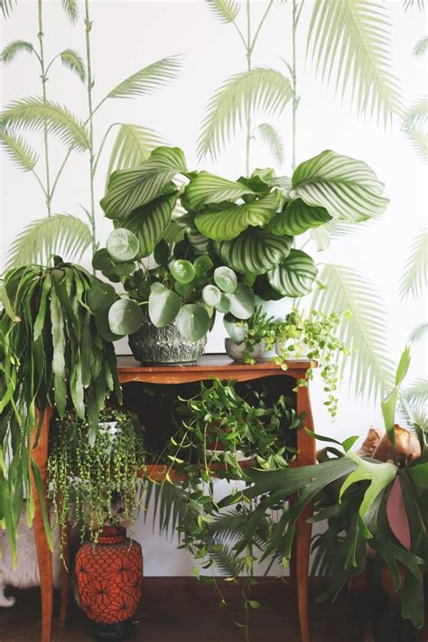 1000 ideas about indoor plant decor on plant