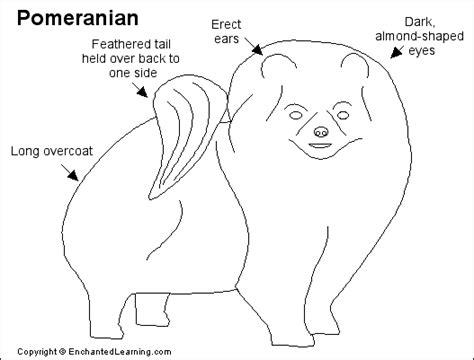 pomeranian anatomy pomeranian printout enchantedlearning