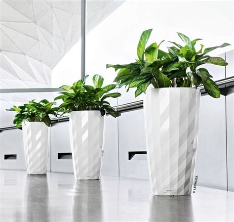 striking white lechuza diamante planters available at