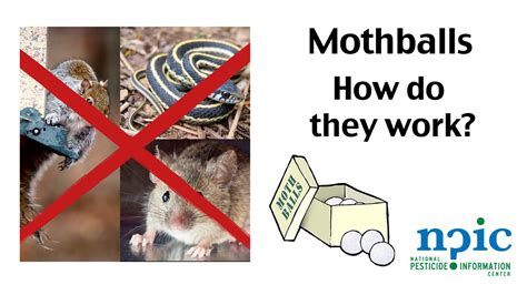 do moth balls kill bed bugs mothballs how do they work youtube