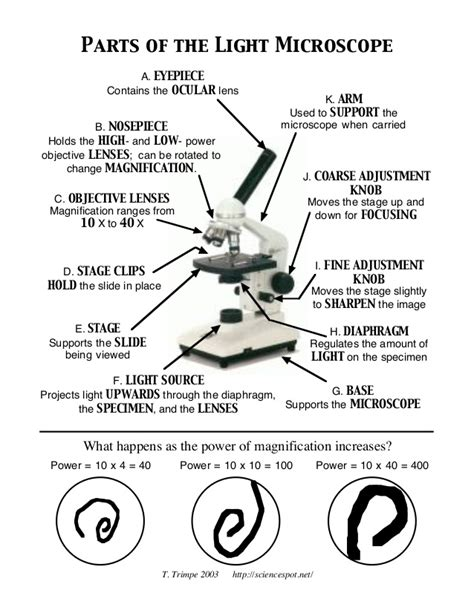 Parts Of A Microscope Worksheet Answers by Microscope Parts