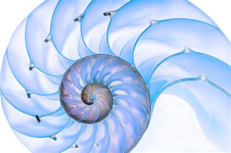 nautilus pattern nature fractal patterns in nature and art are aesthetically