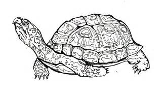 eastern box turtle illustration and design